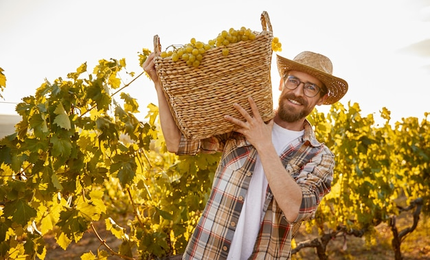 Happy man in checkered shirt and hat smiling and looking at camera while carrying wicker basket with ripe grapes during harvest on vineyard at sunset