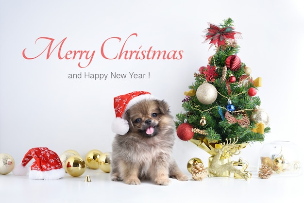 Happy new year, christmas, dog in santa claus hat, celebration balls and other decoration