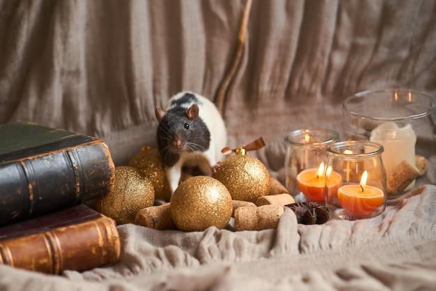 С новым годом. симпатичная бело-серая домашняя крыса в новогоднем декоре, игрушках и свечах. крыса - символ нового года 2020.