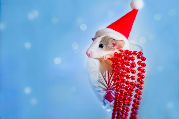 Happy new year symbol of 2020 new year - white or metal silver rat. cute rat in toy interior with reflection in mirror