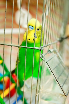 A happy parrot in a cage in nature in the park