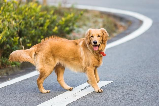 公園で遊んでいるハッピーなペットの犬