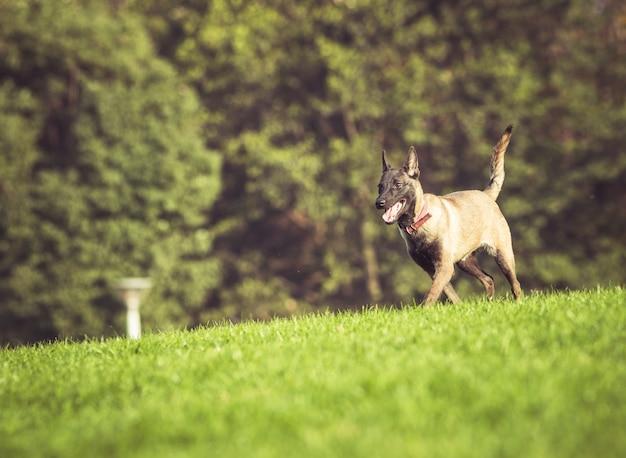 잔디에 노는 행복 한 애완견