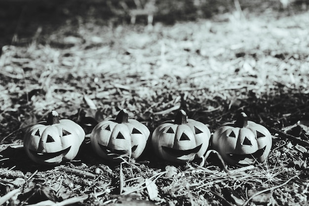 Happy pumpkins placed on ground