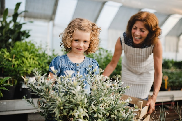 A happy small girl with senior grandmother gardening in the greenhouse, holding box with plants.
