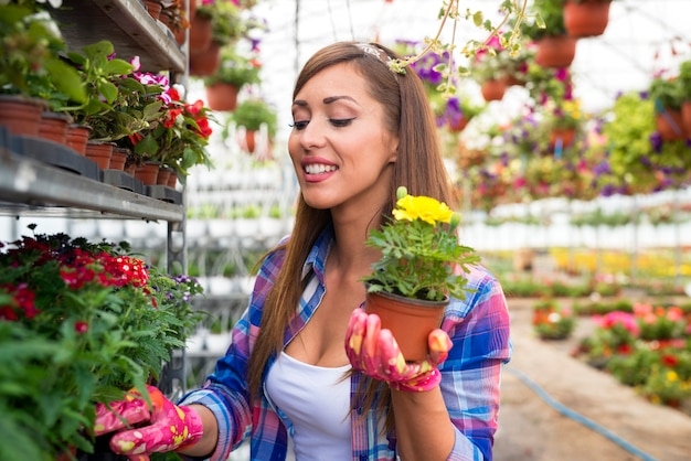 Happy smiling woman florist with beautiful face holding yellow potted flowers in greenhouse garden.
