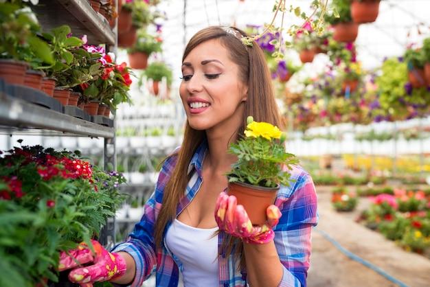 温室の庭で黄色い鉢植えの花を保持している美しい顔を持つ幸せな笑顔の女性花屋。