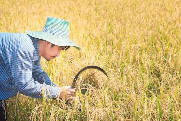 Happy thai farmer man holding sickle and crops rice field farm in thailand