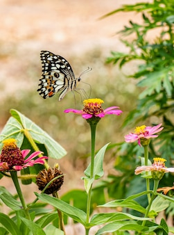 Happy time of butterflies in sunny day