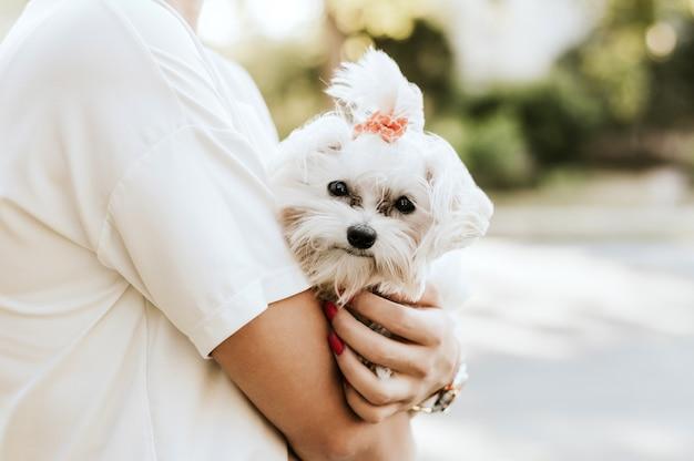 행복 한 여자는 하얀 몰타어 개를 보유하고있다. 우정과 사랑의 개념입니다.