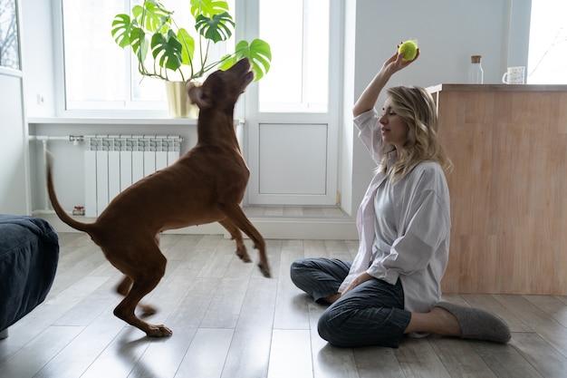 그녀의 비즐라 개가 바닥에 앉아 집에서 테니스 공을 가지고 노는 행복한 여성 소유자