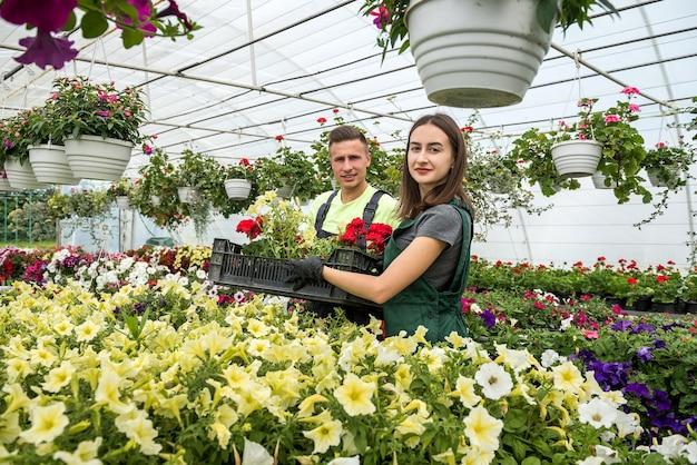 販売のために多くの異なる花を育てる温室の幸せな労働者。ファミリービジネス
