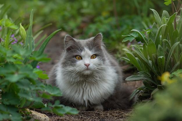 花の間に屋外で横たわっている幸せな若い猫。自然の中での喜び。花が咲く隣の庭に横たわっている猫。ペットの自由と自然のコンセプトを楽しんでいます。