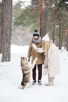 純血種のシベリアンハスキーと遊んで、雪に覆われた松林で楽しんでいるウィンターウェアの幸せな若いカップル