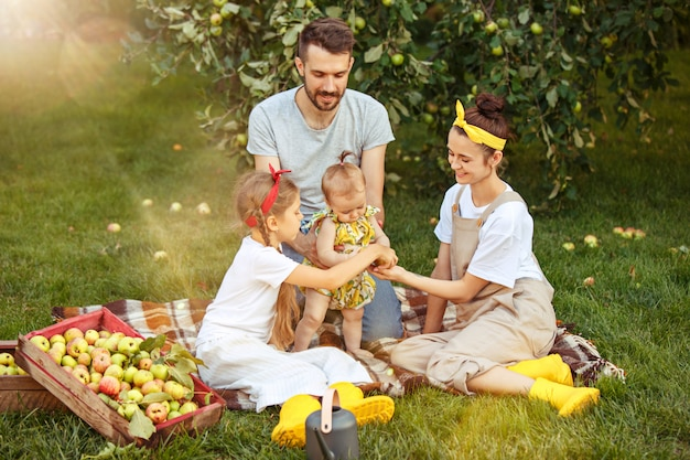 The happy young family during picking apples in a garden outdoors