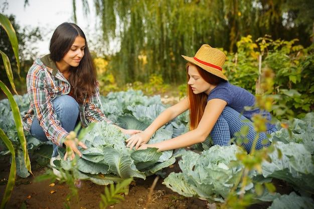 屋外の庭でベリーを摘んでいる間、幸せな若い家族。愛、家族、ライフスタイル、収穫、秋のコンセプト。