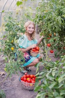 Счастливая молодая девушка с урожая помидоров в теплице