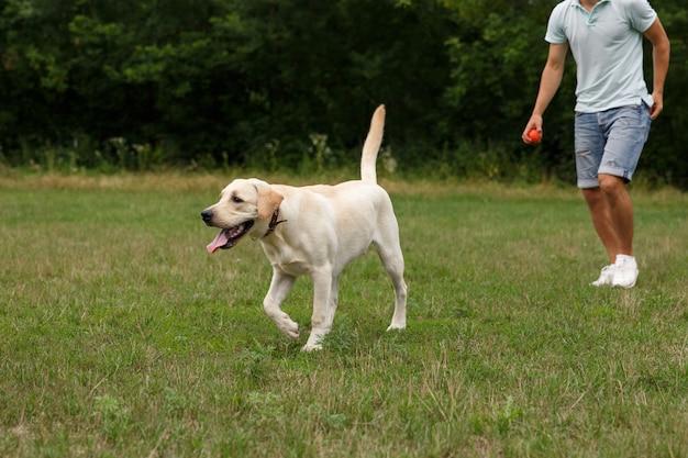 ラブラドール犬を屋外で歩く幸せな若い男