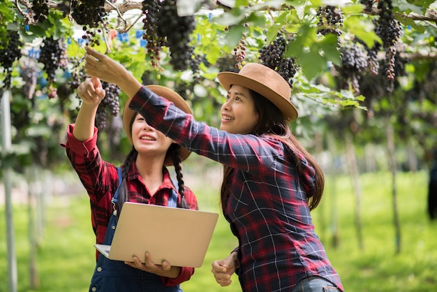 Happy young women gardener holding branches of ripe blue grape