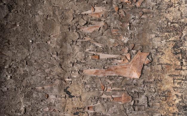 デザインのための堅い木の皮の背景