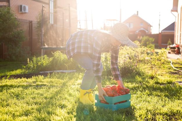麦わら帽子の勤勉な若い女性の庭師は、トマトの収穫箱を拾います