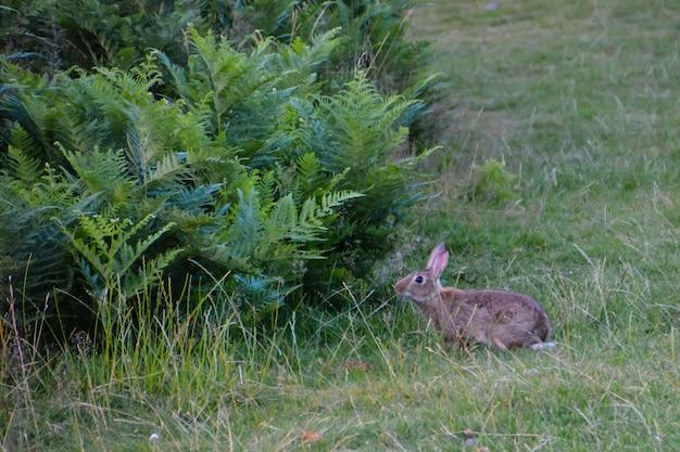 수풀이 우거진 공원에 있는 토끼. 영국 런던.