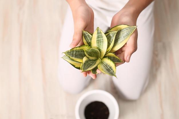 손에 즙이 많은 클로즈업과 꽃을 이식하는 자연 가정 식물과 조화를 이룹니다.