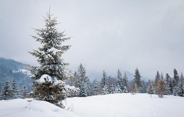 가혹한 겨울 풍경 아름다운 눈 덮인 전나무는 추운 겨울 날 안개가 자욱한 산악 지역에 서 있습니다. 추운 북부 자연의 개념. copyspace