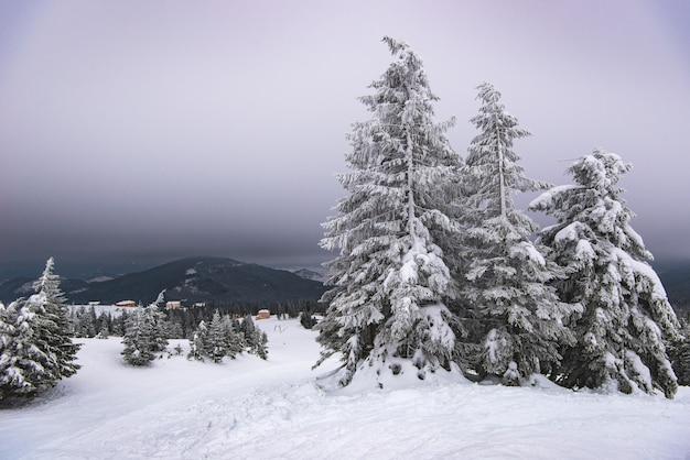 Суровый зимний пейзаж красивые заснеженные ели стоят на фоне туманной горной местности