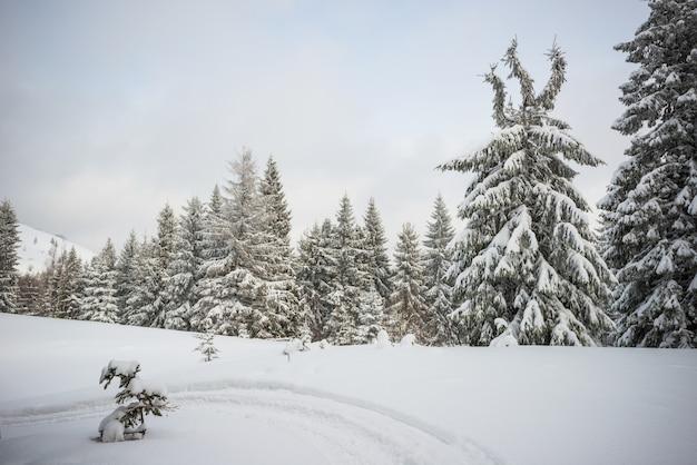 Harsh winter landscape beautiful snowy fir trees