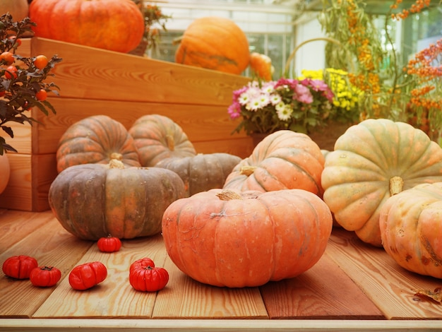 The harvest, autumn pumpkin different lifestyle.
