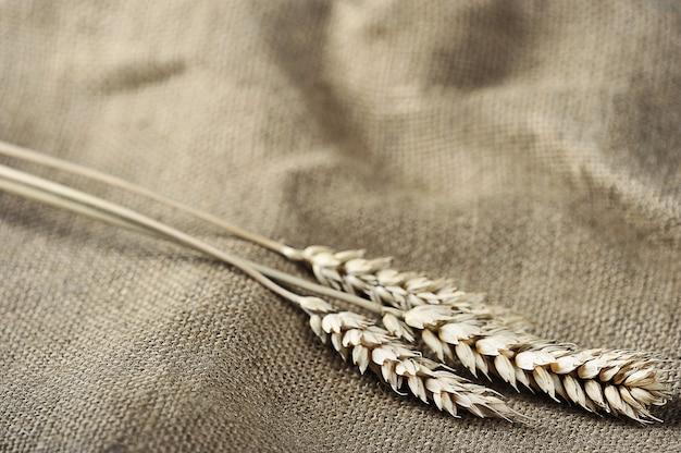 Урожай фон колосья пшеницы