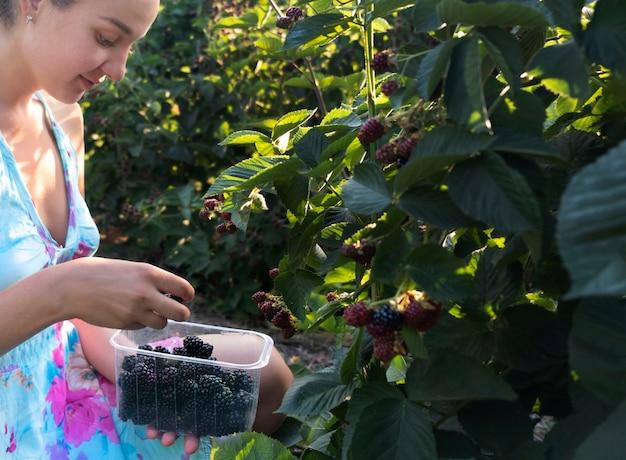 収穫、農業、有機果実。コンテナー、側面図で熟した新鮮なブラックベリーを選ぶ若い成人女性