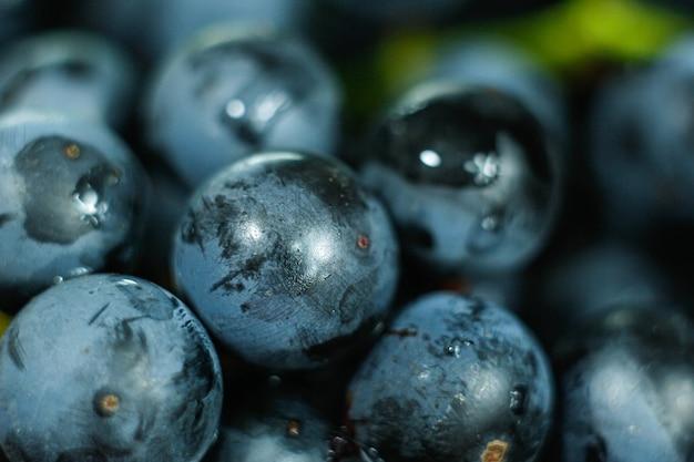 Harvest fresh blue isabella grapes