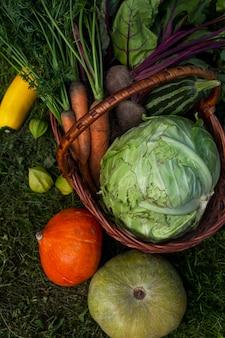 화창한 날 정원에서 바구니에 신선한 야채를 수확하십시오. 건강에 좋은 음식과 비타민. 확대. 수직의.