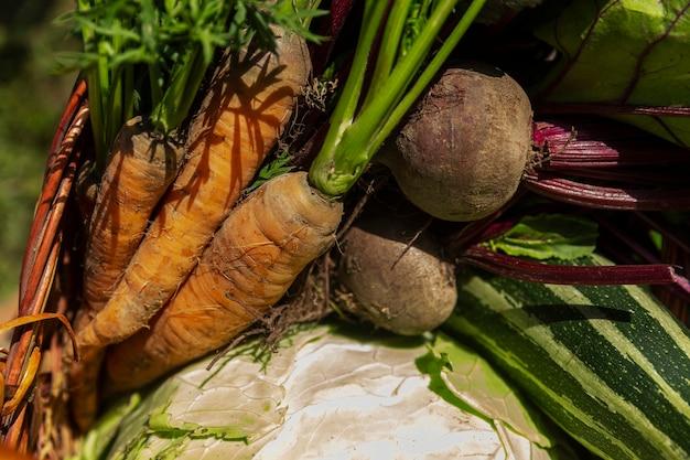 화창한 날 정원에서 바구니에 신선한 야채를 수확하십시오. 건강에 좋은 음식과 비타민. 확대.