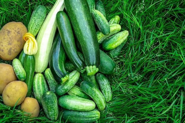 緑の草の上に新鮮な野菜のジャガイモ、キュウリ、ズッキーニを収穫します。