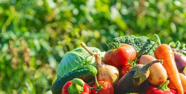 Сбор урожая в саду. органические овощи. выборочный фокус.