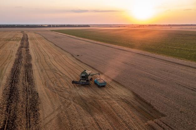 麦畑で収穫します。収穫したばかりの穀物を、夕日を背景にトラックに積み込みます
