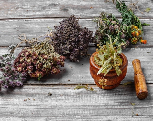 Harvest of medicinal herbs and plants
