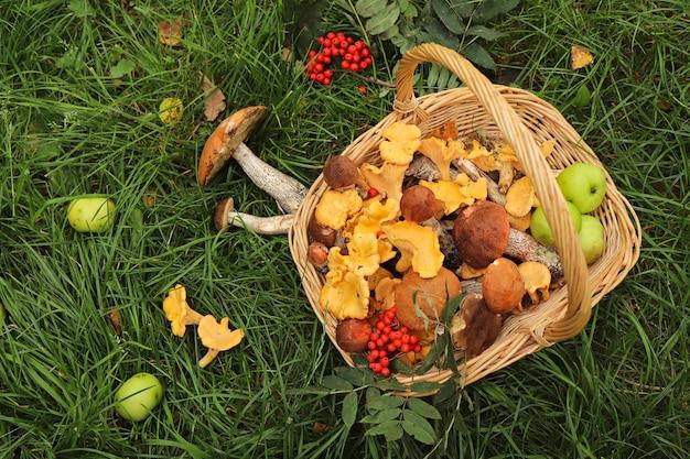 Урожай подберезовиков, лисичек в корзине с яблоками и ягодами рябины на траве.