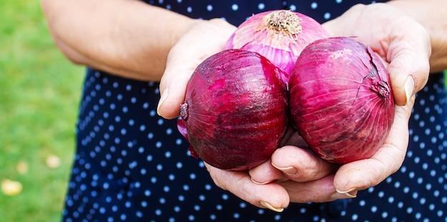Урожай лука в руках женщины. селективный фокус. природа