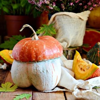 Урожай тыкв. композиция для празднования хэллоуина.