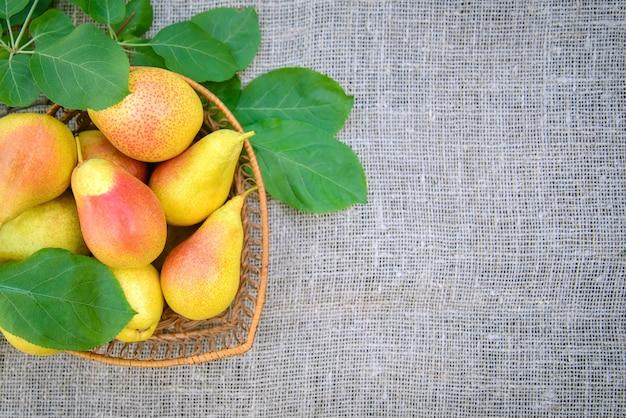 Урожай спелых желто-красных груш в плетеной посуде на фоне мешковины с копией пространства