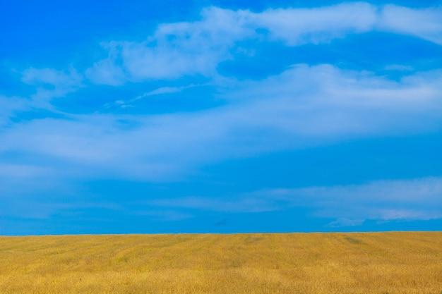 Урожай спелой пшеницы растет в поле с голубым небом