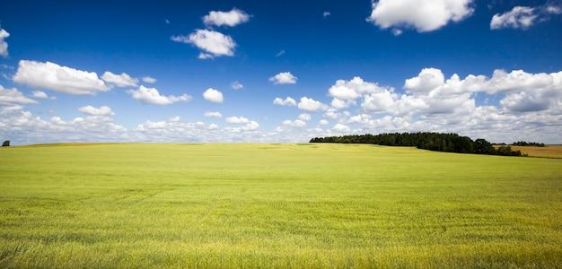 ライ麦や小麦を収穫する