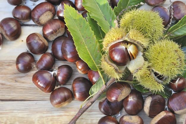 Harvest of sweet chestnuts