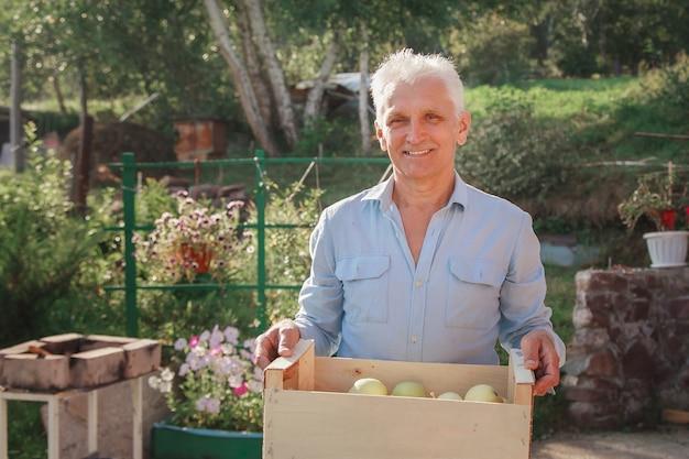 Урожай: белые яблоки в деревянном ящике. продукция готова к экспорту. импорт сезонных товаров. пожилой мужчина держит коробку. садовник наслаждается плодами своего труда