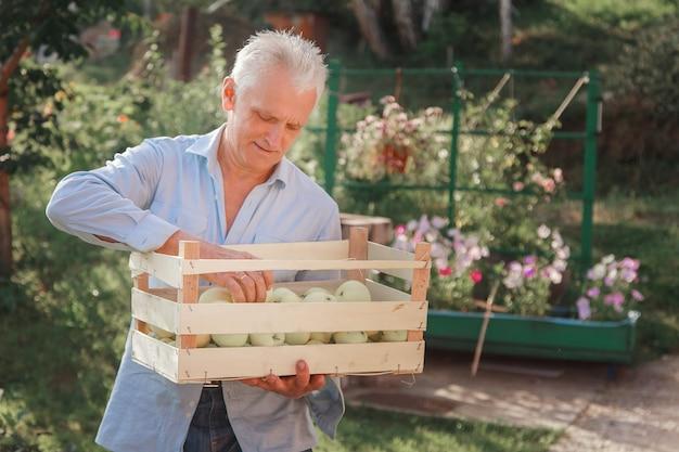 収穫:木製の箱に白いリンゴ。輸出可能な製品。季節商品の輸入。老人が箱を抱えています。庭師は彼の仕事の成果を楽しんでいます
