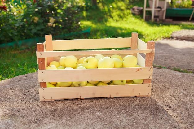 Урожай: белые яблоки в деревянном ящике. продукция готова к экспорту. импорт сезонных товаров.